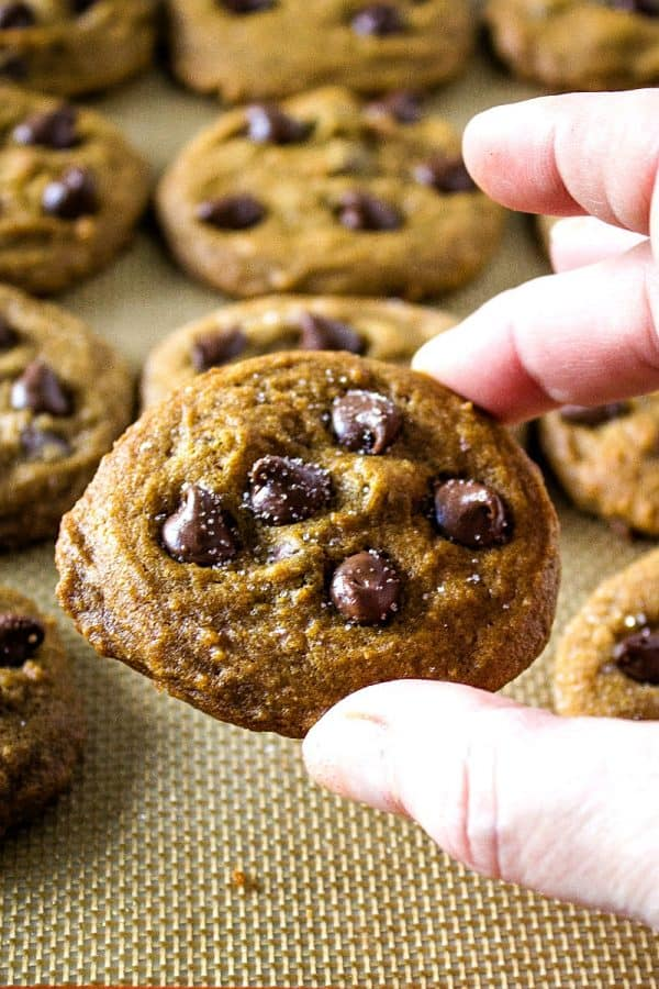 Chewy Molasses Chocolate Chip Cookies are amazingly soft, perfectly spiced and chock full of dark chocolate chips.
